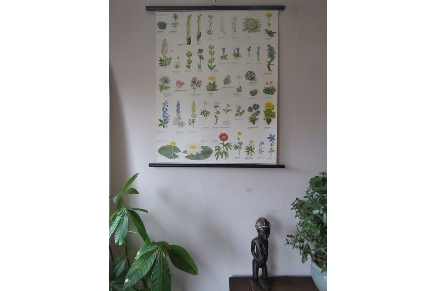 large_vintage-pull-roll-down-botanical-school-wall-chart-poster-of-flowering-plants